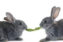 Two Bunny And A Vegetable Leaf