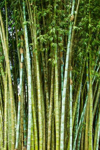bambusowy-gaj