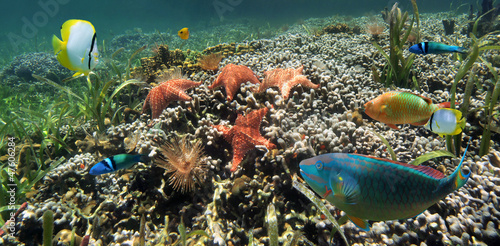 Underwater coral reef with starfish, marine worms and colorful tropical fish, Caribbean sea #47606284