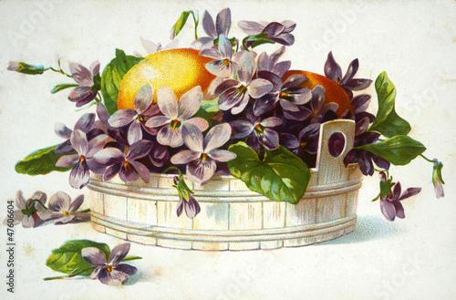 kwiaty-ilustracji