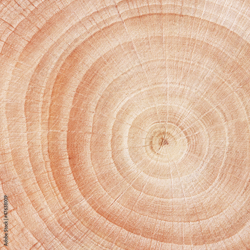 Helle Holz Textur Close Up Buy This Stock Photo And Explore