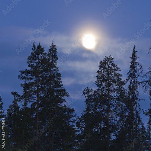 Foto op Aluminium Volle maan Full moon shining over forest