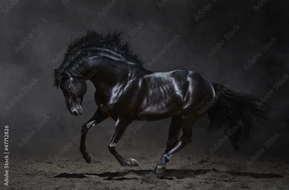 Fototapeta Galloping black horse on dark background