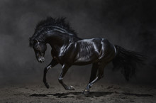 Galloping Black Horse On Dark ...