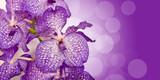 Orchidée Vanda, bokeh violet