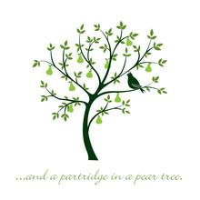 Partridge In A Pear Tree Chris...