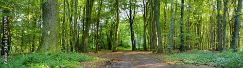 Wall Murals Forest Forest road