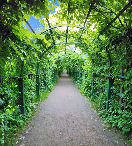 zielony-tunel-z-roslin-ogrod-botaniczny