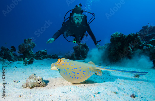 Fotografie, Obraz  Diver and Bluespotted stingray