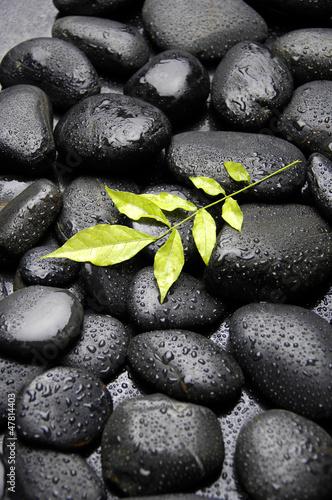 lisc-zielonej-rosliny-w-kropli-wody
