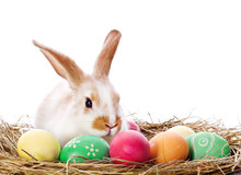 Easter Bunny And Colored Eggs