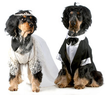 Dog Bride And Groom