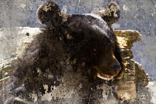 Nowoczesny obraz na płótnie Artistic image with background texture bear head