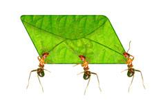 Ant Messenger