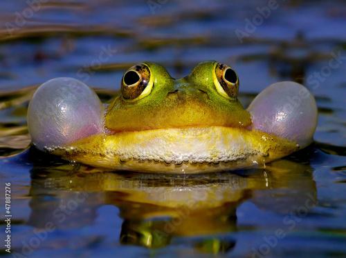 Tuinposter Kikker Croaking Bubble Frog