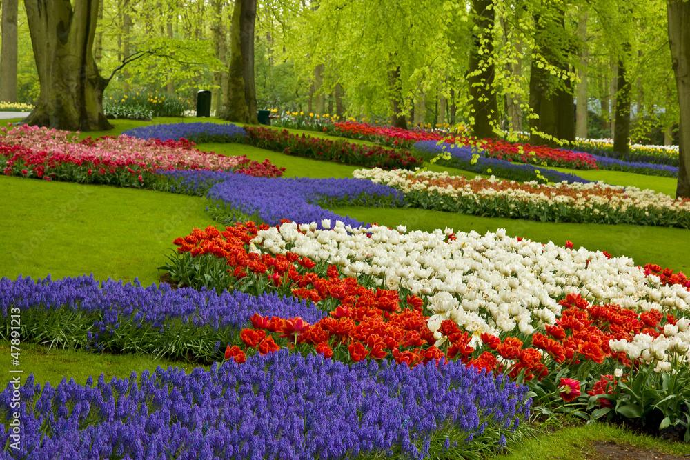 Fototapety, obrazy: Wiosenne kwiaty w ogrodzie Holandii