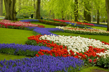 Fototapeta spring flowers in holland garden