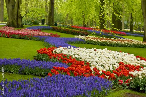 Obraz Wiosenne kwiaty w ogrodzie Holandii - fototapety do salonu
