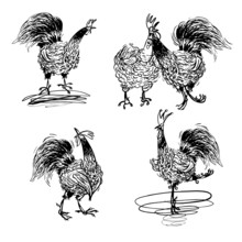 Roosters And A Hen Black And W...