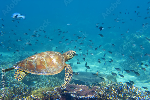 Poster Tortue A sea Turtle portrait close up while looking at you