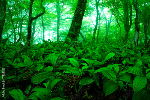Foto op Plexiglas Groene 緑の森