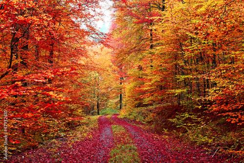 kolorowa-jesien-lasowa-sciezka-w-pazdzierniku