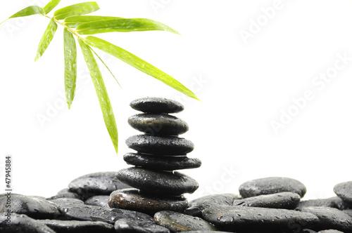 wciaz-zycie-z-swiezymi-bambusowymi-liscmi-z-brogujacym
