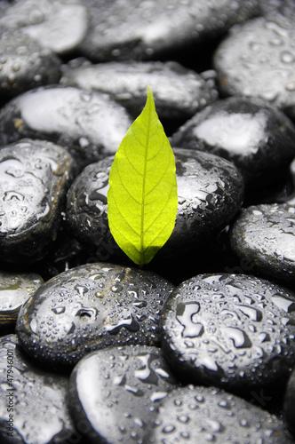 zielona-roslina-w-kropli-wody-na-kamyk