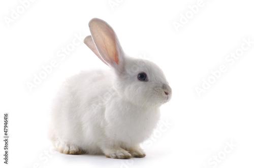 white rabbit on the white background Fototapete