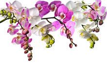 Bouquet Of Orchids (Phalaenops...