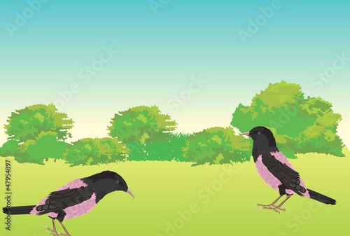 Poster Oiseaux, Abeilles The pink garlings vector illustration
