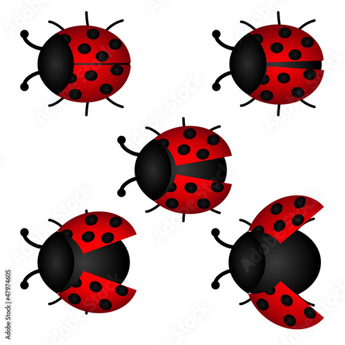 Canvas Prints Ladybugs set of Ladybird, vector