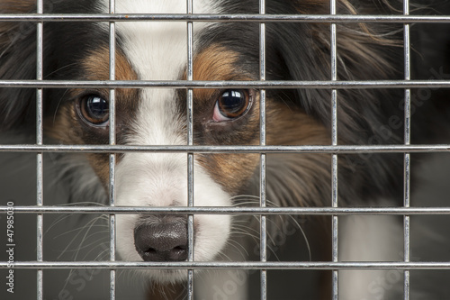 Fotografie, Obraz  Dog in a cage