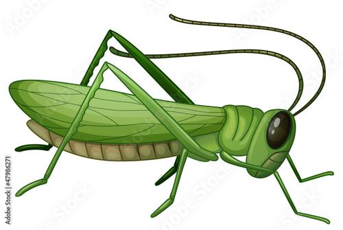 Canvas Print A grasshopper