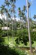 Tropical island and resort