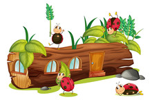 Ladybugs And A House