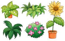 Flowerpots And Plants