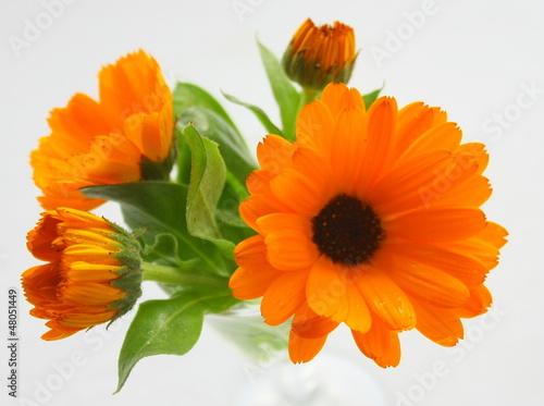 Fotografía  bouquet de fleurs de souci