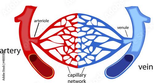 Fotografía rete capillare