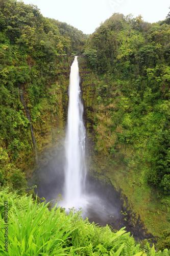 Poster Parc Naturel Hawaii Akaka Falls - Hawaiian waterfall
