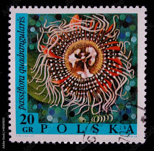 Fotografia  Postage stamp