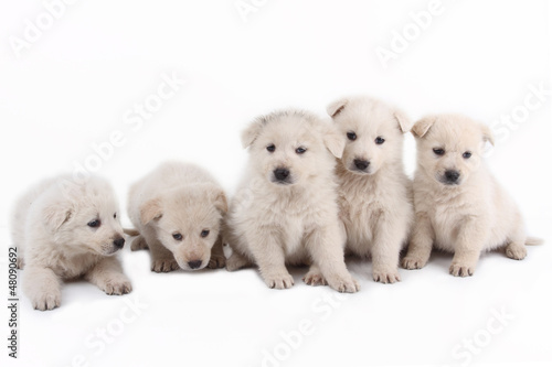 Fototapety, obrazy: cuccioli teneri teneri