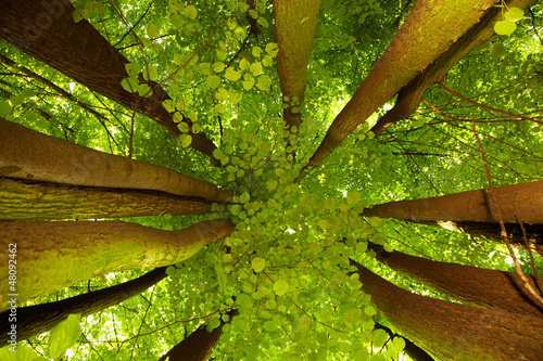 Photo Under greenery - the beech canopy