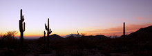 Saguaro Cactus At Sunrise Pano...