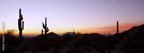 Photo Stands Arizona Saguaro Cactus at Sunrise Panoramic