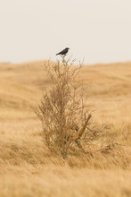 Single Crow Sitting On A Small Tree