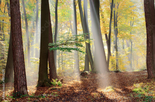 Spoed Foto op Canvas Bos in mist Forest