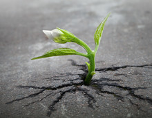 Little Flower Sprout  Grows Th...