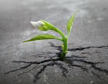 Little Flower Sprout  Grows Through Urban Asphalt Ground