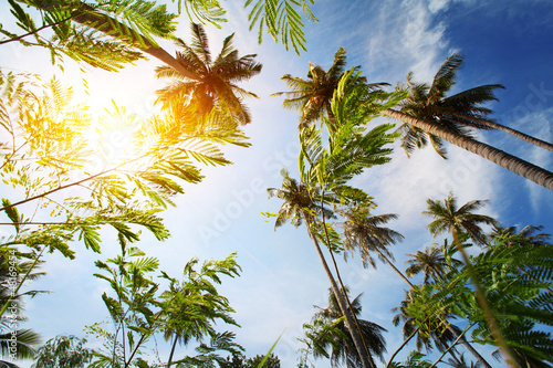 Photo sur Aluminium Sur le plafond Palm trees